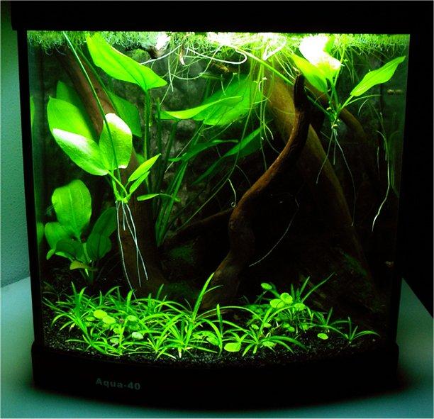 Meer Aqua 40 u0026#39;s