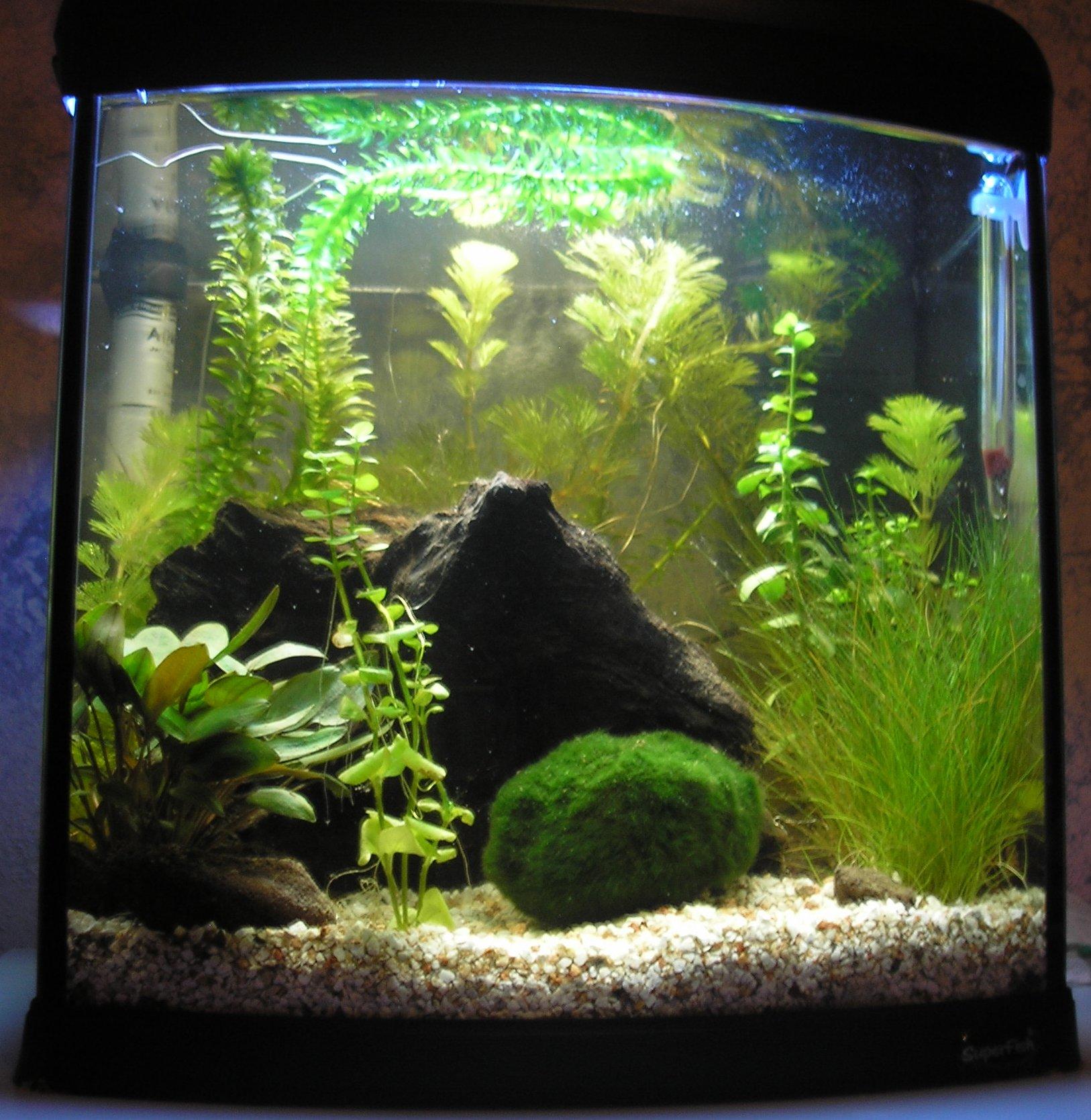 Aquarium Wand Maken  Aquarium meubel zelf maken aquariaforum be toon onderwerp
