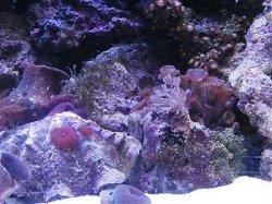 Aquarium water zachter maken
